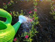 imagen ¿Qué hacer cuando el suelo del jardín se seca rápido?