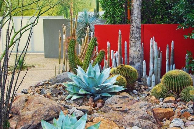 jardin del desierto