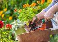 imagen ¿Pueden las plantas transmitirnos enfermedades?