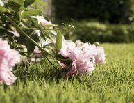 imagen Evita que las plantas maduras se vuelvan largas y débiles