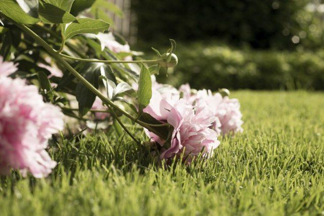 como evitar que las plantas se vuelvan largas y debiles