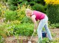 imagen Herramientas de jardín que no podrían faltar en el cobertizo