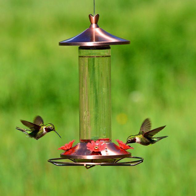 Como alejar a las hormigas de los bebederos de colibríes