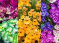 imagen Plantas anuales que aman la sombra