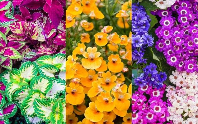 plantas anuales