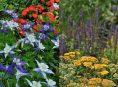 imagen Pautas para combinar colores en tu diseño de paisaje