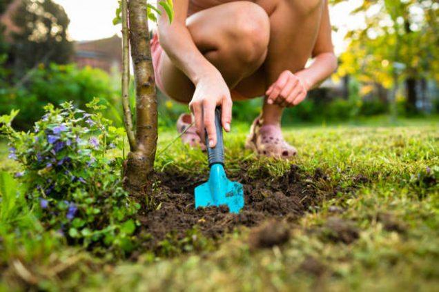 cuidado del jardin