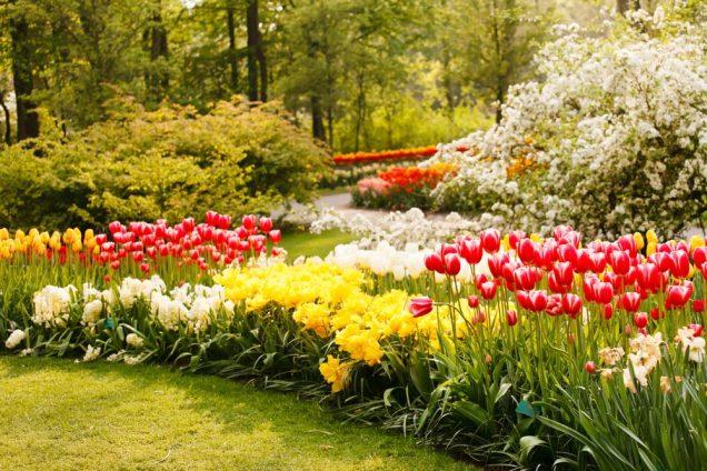 ideas de diseno de jardines