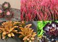 imagen 7 impresionantes suculentas coloridas