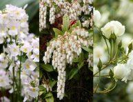 imagen 8 mejores flores blancas para tu jardín