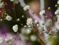 imagen 5 flores diminutas para tu jardín
