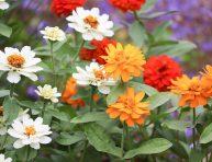 imagen 5 plantas con flores maravillosas para tu jardín