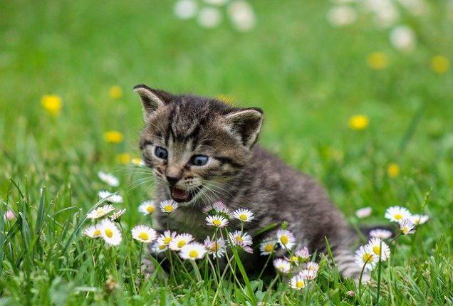 Cómo mantener a los gatos fuera de la tierra de mi jardín