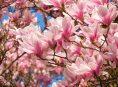 imagen Árboles con flores para darle color al jardín todo el año