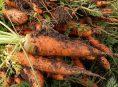 imagen ¿Qué plantar en el huerto durante el otoño?