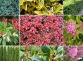 imagen 9 tipos de arbustos y sus características y cuidados