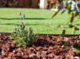imagen ¿Qué puede hacer la corteza de pino por mi jardín?