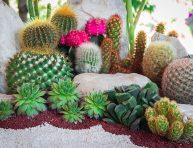imagen 5 ideas de jardín de cactus