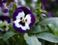 imagen 8 plantas que aman el clima frío