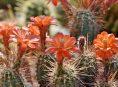 imagen Cómo trasplantar un cactus en el jardín