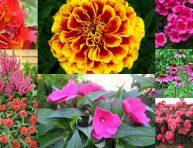 imagen 8 flores fáciles de cultivar