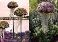 imagen Convierte tu jardín con estas suculentas en forma de medusas