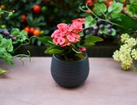 imagen ¿Por qué necesitas llenar ya tu casa de plantas?