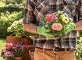 imagen Plantas perennes y anuales tolerantes a la sequía