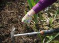 imagen Tareas esenciales de limpieza de jardín en primavera