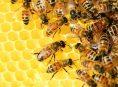 imagen ¿Puede la miel ser tóxica para los humanos?