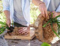 imagen DIY: jardín vertical de Rhipsalis con rodajas de madera