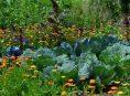 imagen Razones por las que deberías cultivar flores en tu huerto