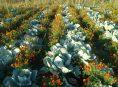 imagen Plantas complementarias de la familia del repollo