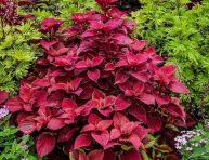 imagen 5 plantas perennes amantes de la sombra