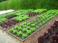 imagen Ideas para cultivar muchos alimentos en un huerto