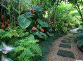 imagen 5 plantas tropicales que puedes cultivar en casa