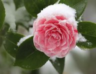 imagen Cómo planificar un jardín en invierno