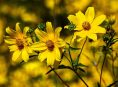 imagen Agrégale color a tu jardín de otoño