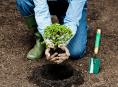 imagen Conceptos básicos para plantar árboles y arbustos pequeños
