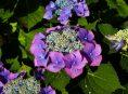 imagen Cómo cuidar los arbustos en flor