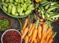 imagen Ahorra sembrando en casa: aprovecha las ofertas de Alcampo