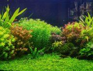 imagen Las Mejores plantas acuáticas para Aquascaping